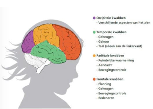 Cognitieve brein