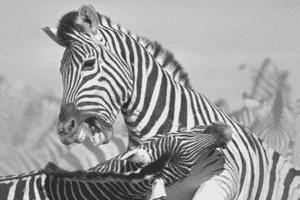 vechten en vluchten relatiestress 2 sprankelende relatie